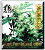 Sensi Skunk Kush Seeds Clearance Sale up to 50% OFF